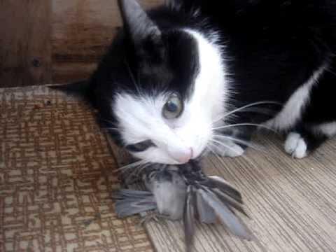 как кошка ловит воробья