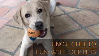 Shane and Ryland -  Best of Uno & Cheeto