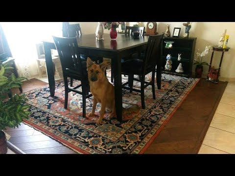That's what Susan Miller Said - Oriental rug cleaning