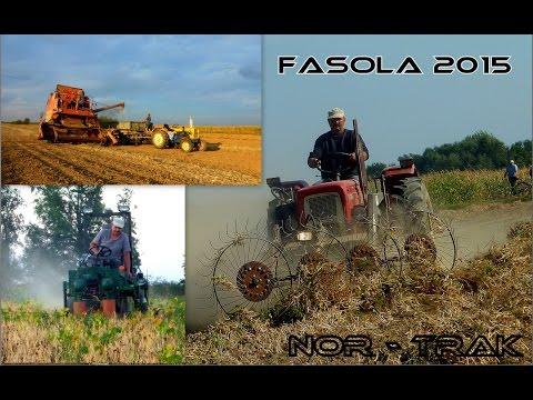   Akcja Fasola 2015   Koszenie   Zgrabianie   Młócenie   u Misia   Nor - Trak