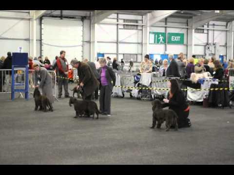 Field Spaniel Dog Challenge, SKC May 2012