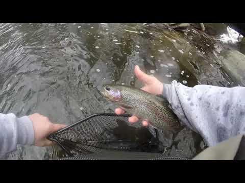Mianus River winter trout