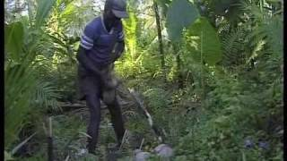 A lesson in Eco-Anarchism from Bougainville