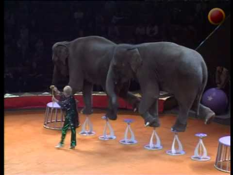 Trained elephants