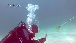 Muskie Attacks (bumps) Scuba Diver