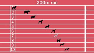 Dog breeds speed comparison, Fastest and slowest dogs!