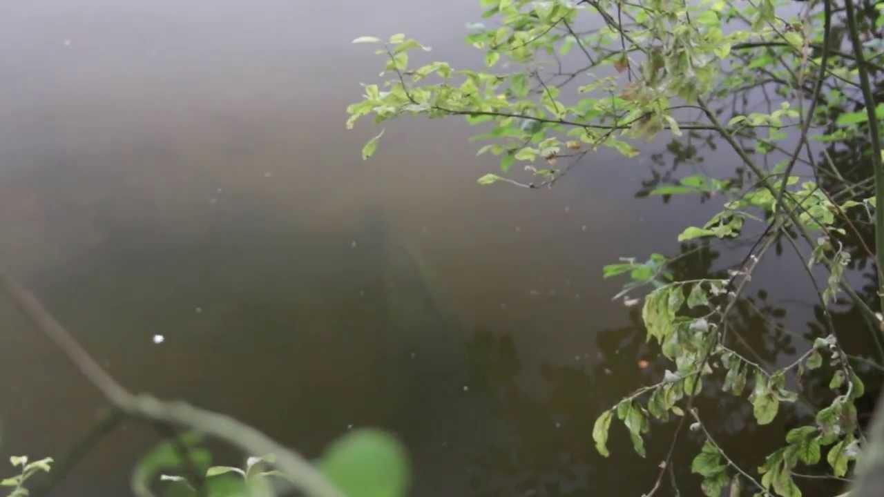 Monster UK carp feeding over bait - JRC fishing