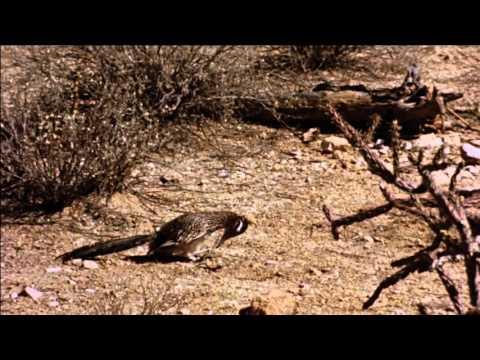 Watch The Living Desert Disney Movies Anywhere - Vídeo prévio do filme:  The Living Desert - 1953!