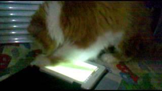 Самая умная кошка 2