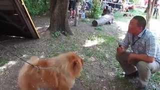 выставка собак в Бишкеке..