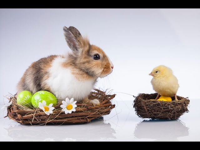 """Don't worship chicken eggs & Easter bunnies, worship """"this Jesus"""""""
