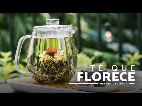 T� que se hace flor: conoce el 't� de flor' que florece en el agua (Anthea Boutique)