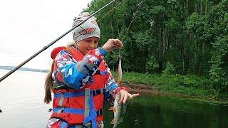 Вечерняя рыбалка на спиннинг с дочкой промысловики всё перегородили Рыбалка на окуня и щуку