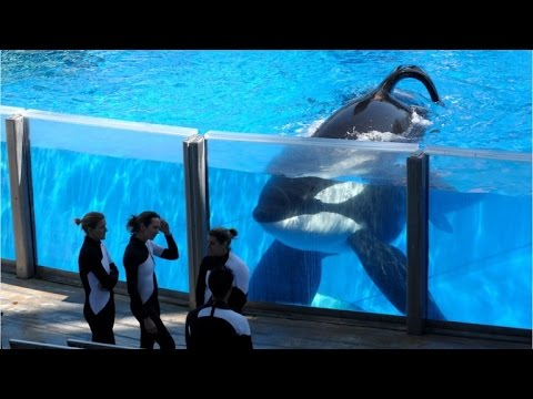 Tilikum, SeaWorld's Most Famous Orca Whale, Has Died