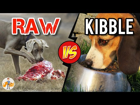 Should You Feed Raw Food vs Kibble? Benefits and Risks Dog + Cat Health Vet Advice