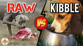 Should You Feed Raw Food vs Kibble? Benefits and Risks - Dog + Cat Health Vet Advice