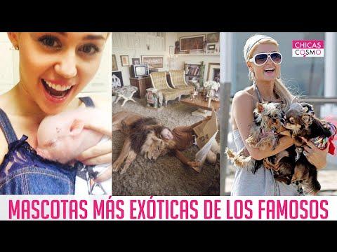 MASCOTAS MÁS EXÓTICAS DE LOS FAMOSOS