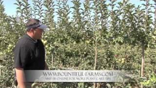 Espalier Fruit Trees - Plant Care