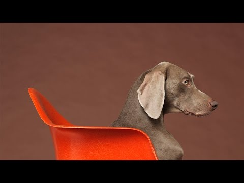 ARTIST SERIES :: WILLIAM WEGMAN