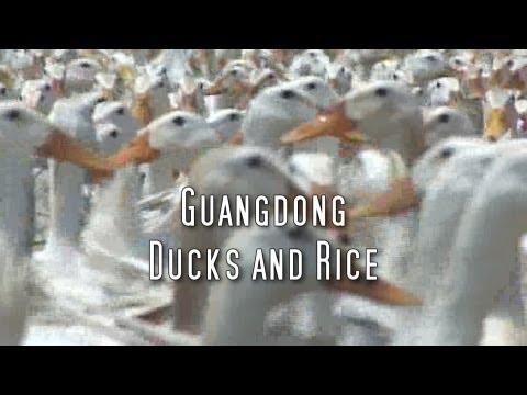 Martin Yan's China: Guangdong Ducks & Rice