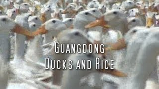 Martin Yan's China: Guangdong Ducks & Rice