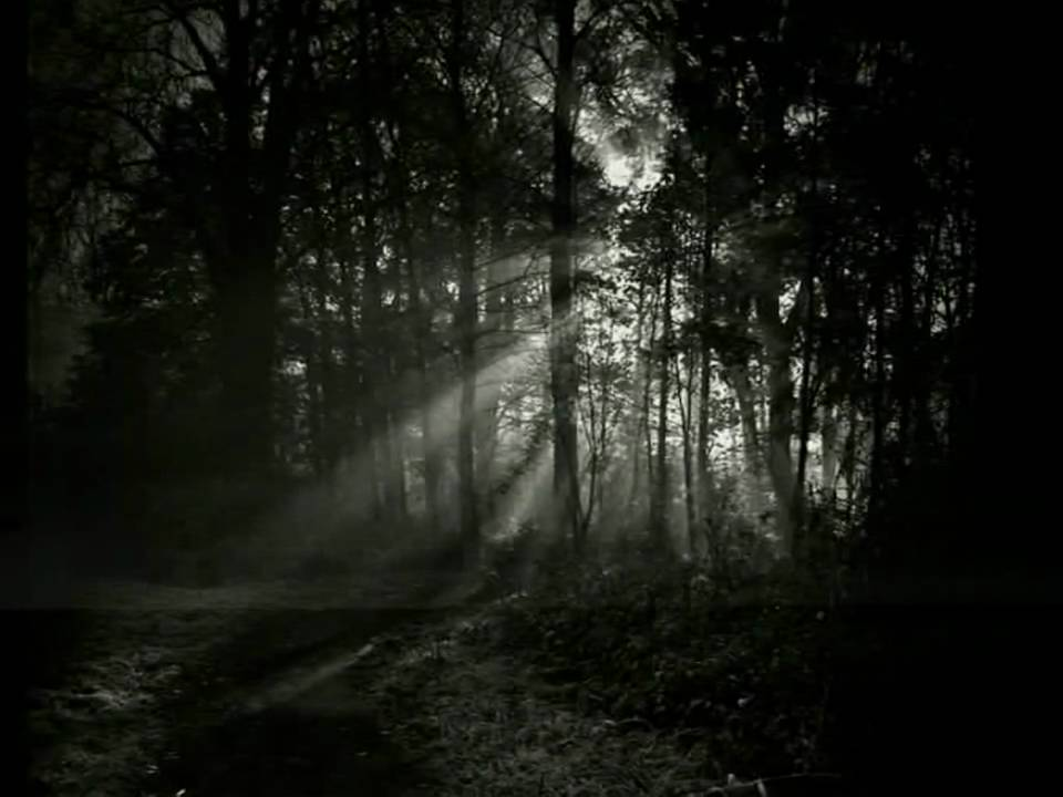 Image result for darkness and solace