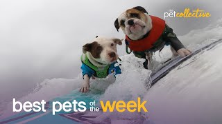 Surfing Dogs Have An Endless Summer | Best Pets of the Week