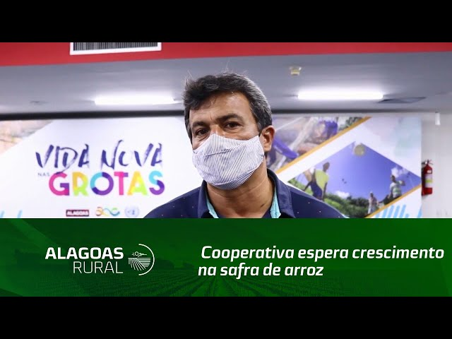 Cooperativa espera crescimento na safra de arroz na cidade de Igreja Nova