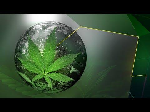 Le cannabis à travers le monde