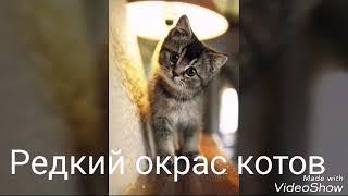 Редкий окрас кошек.
