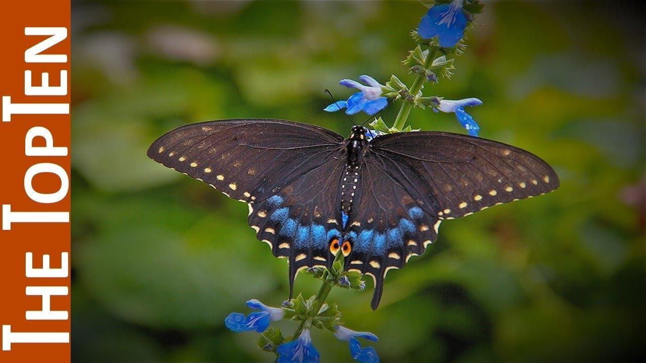 The Top Ten Most Beautiful Butterflies In The World - YouTube  The Top Ten Mos...