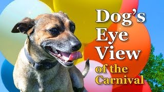 Dog's Eye View Of The Carnival