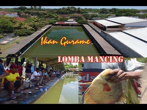 Umpan Ikan Gurame Terjitu Terbaru 2017 Di Lomba Mancing Srono Banyuwangi Youtube