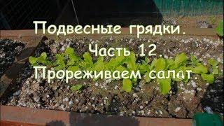 Подвесные грядки  Часть 12  Прореживаем салат