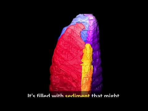 Ediacaran fossil illuminated with CT scan
