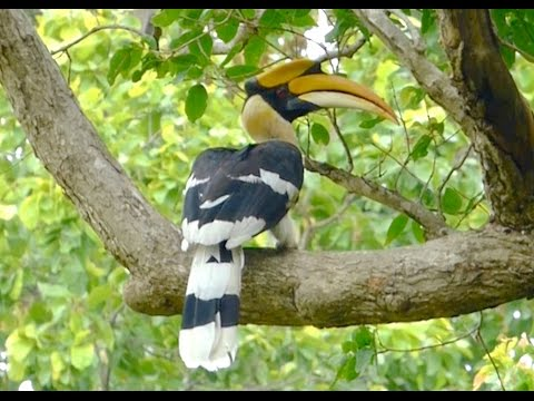 Birding India: Great Diversity Of Avian Species From The Subcontinent