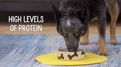 Blue Buffalo Wilderness Regional Recipe Dog Food & Treats | Chewy