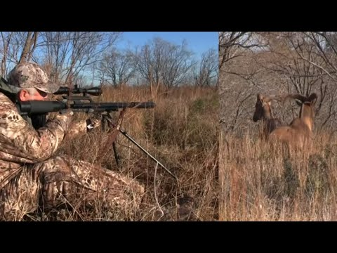 AIRGUN Hunting: Head Shot On Big Game?