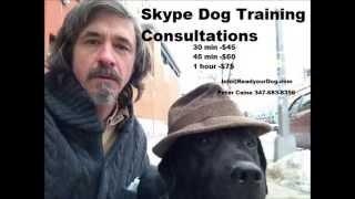 How To Help A Fearful Dog...brooklyn Dog Training / Manhattan Dog Training