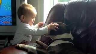 Killer Baby Savages Bull Terrier   !!
