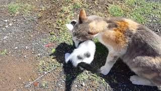 لقطات نادرة ومشاهد رائعة ومؤثرة لقطط تيتو