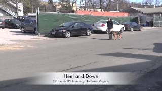 High Energy German Shepherd Before/after Video! Must See! Dog Trainers In Northern Virginia