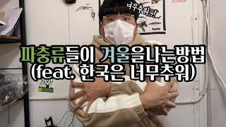 한국에서 파충류들이 겨울을 나는방법 아이추워라 [빅프신…