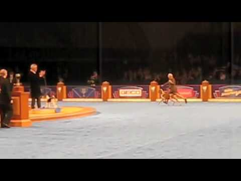 Bracco Italiano dog 'Axel' wins 2009 Eukanuba World Challenge