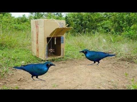 vogelfalle selber bauen doovi. Black Bedroom Furniture Sets. Home Design Ideas