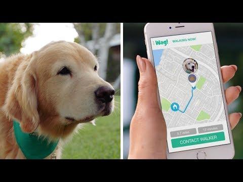 Wag! The #1 On-Demand Dog Walking App! (30s)