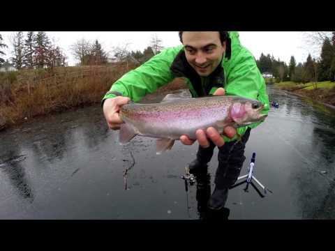Private Lake Thin Ice Fishing - Jaw Jacker Rainbow Trout