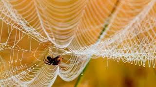 Паутина паука.  А spider web.