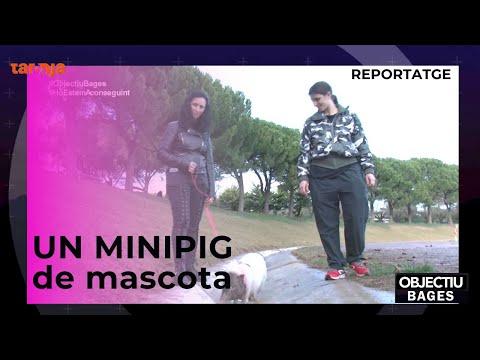 EL BAGES ÉS UN CLAM: BON DIA, D'ELS PETSиз YouTube · Длительность: 4 мин35 с