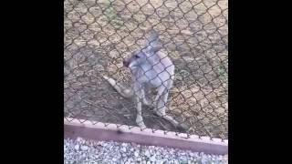 Animal Ark Wildlife Sanctuary North - Nnvewga